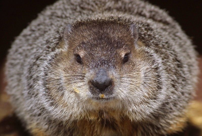 Groundhog Day In Illinois
