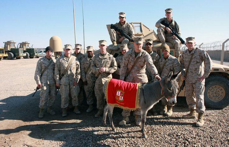 b0d27c9b662c9ca0a135af12049865ce--pet-services-marines